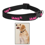 Nylon Web Dog Collar